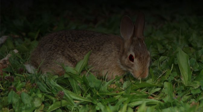 The Ecology of the Vampire Bunny